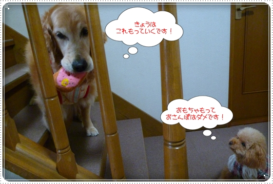 2011,5,23お散歩1