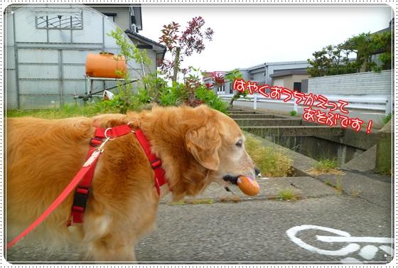 2011,5,23お散歩11