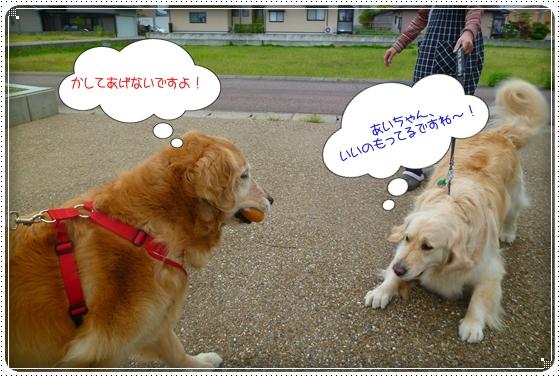 2011,5,23お散歩9