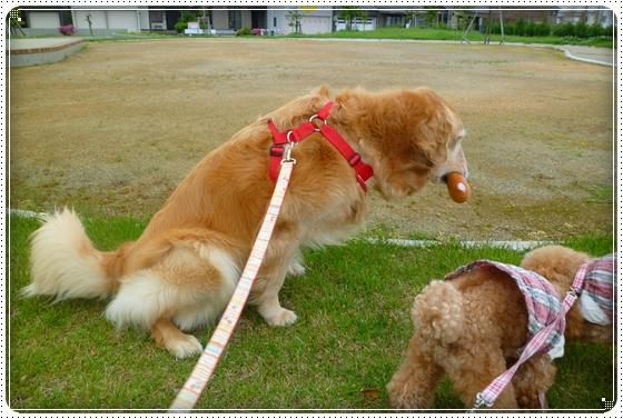 2011,5,23お散歩8