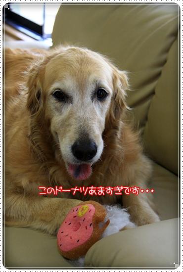 2011,5,23お散歩15