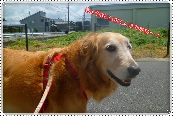 2011,5,24お散歩1