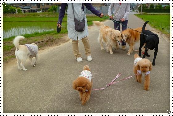 2011,5,26お散歩6