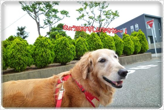 2011,5,26お散歩1
