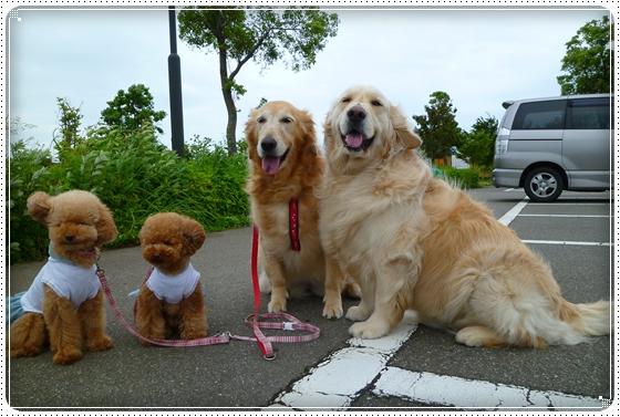 2011,5,27お散歩5