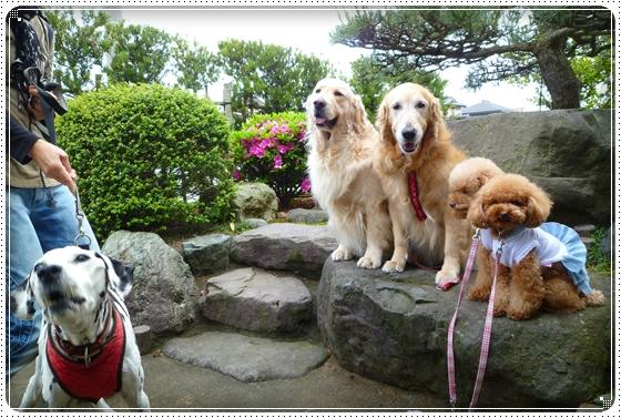 2011,5,27お散歩3