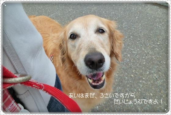 2011,5,28お散歩4