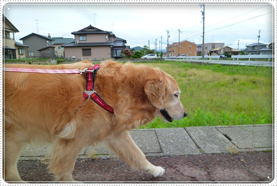 2011,5,28お散歩1