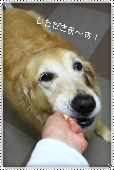 2011,5,28お散歩10
