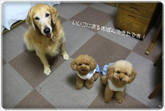 2011,5,28お散歩8