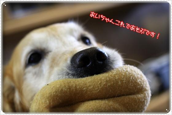 2011,5,30お散歩7
