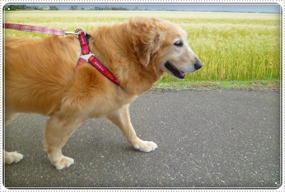 2011,5,30お散歩2