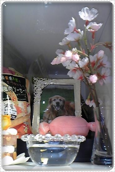 2011,5,31お誕生日3
