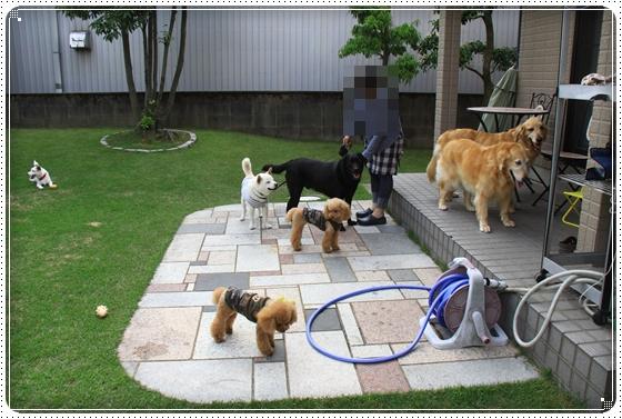 2011,6,4お庭遊び14