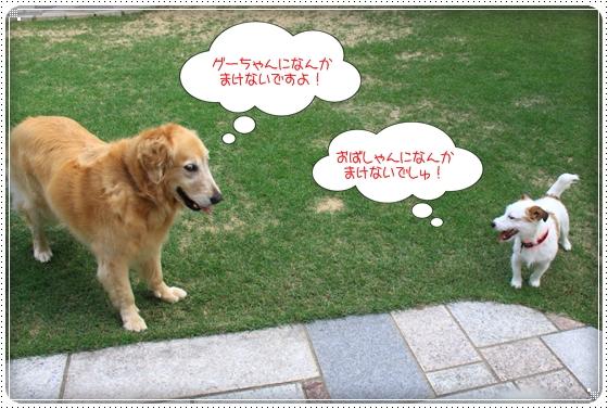 2011,6,5お庭遊び5