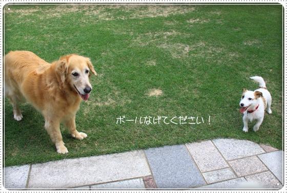 2011,6,5お庭遊び4