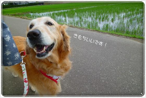 2011,6,14お散歩3