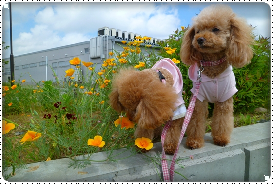 2011,6,14お散歩5