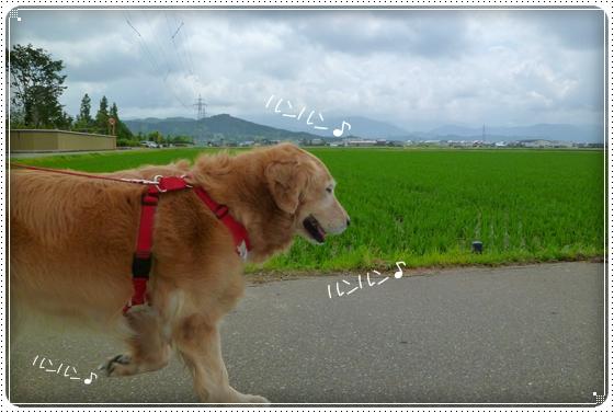 2011,6,14お散歩1