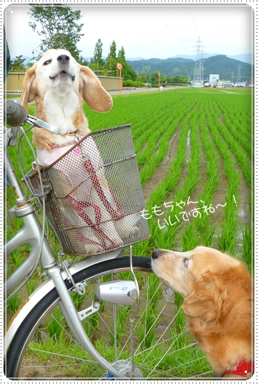 2011,6,15お散歩5