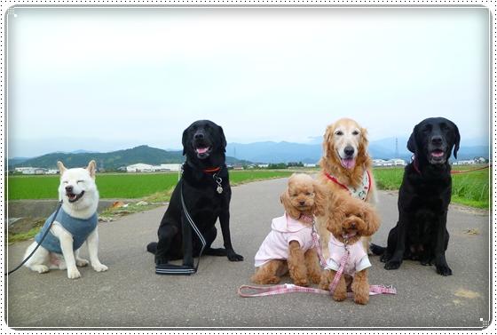 2011,6,15お散歩9