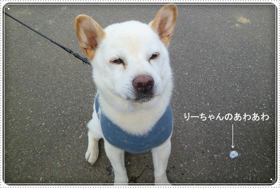 2011,6,15お散歩12