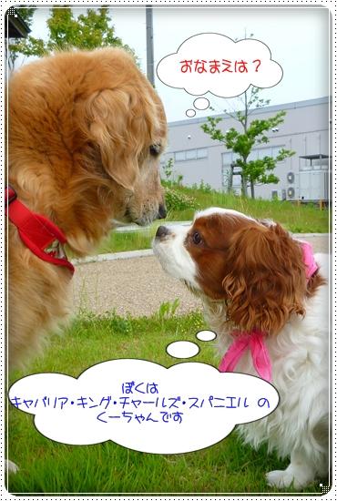2011,6,16お散歩5