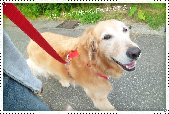 2011,6,16お散歩1