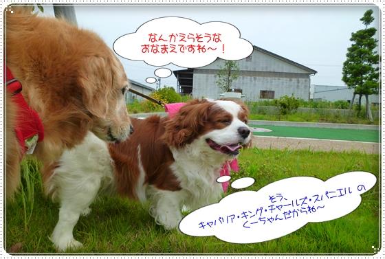 2011,6,16お散歩8