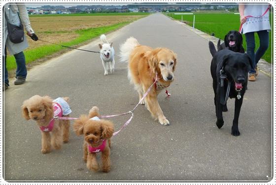 2011,6,16お散歩12