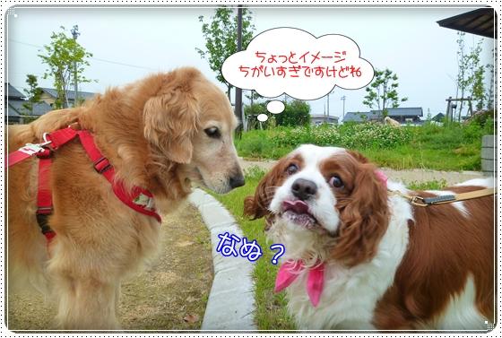 2011,6,16お散歩9