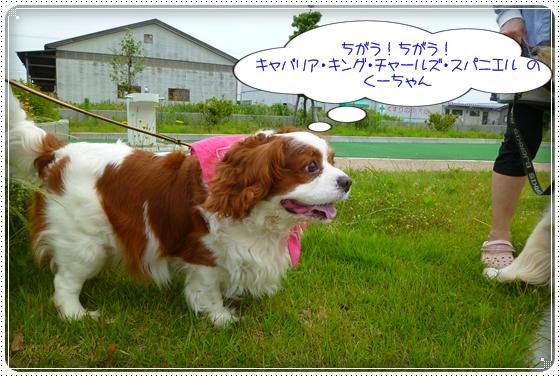 2011,6,16お散歩7