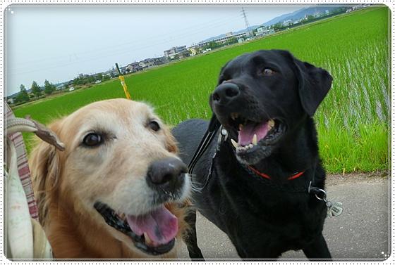 2011,6,16お散歩13