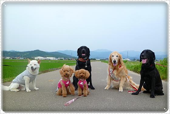 2011,6,16お散歩14