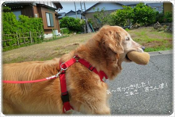 2011,6,17お散歩6