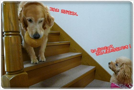 2011,6,17お散歩2