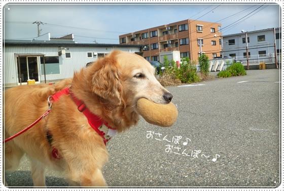 2011,6,17お散歩4