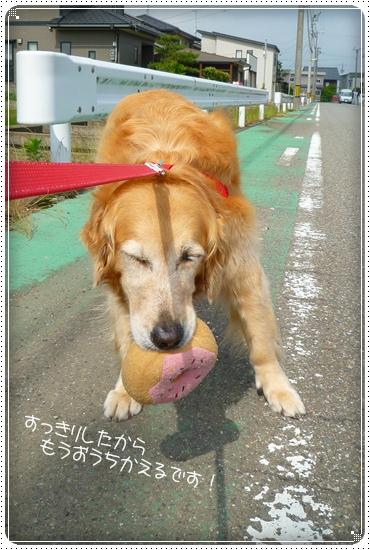 2011,6,17お散歩9