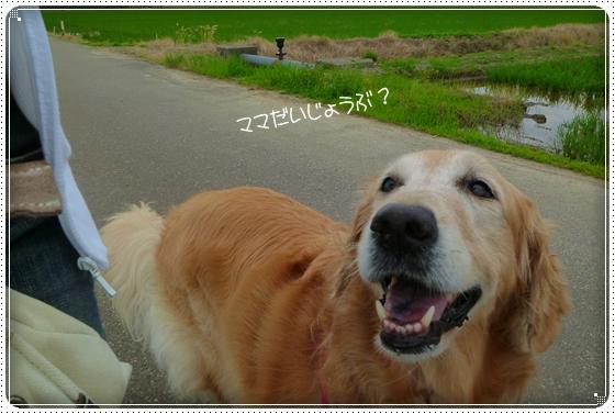 2011,6,18お散歩5