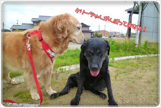 2011,6,18お散歩2
