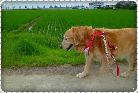 2011,6,18お散歩4