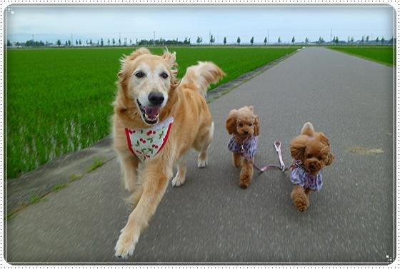 2011,6,18お散歩7