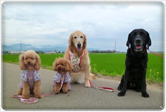 2011,6,18お散歩8
