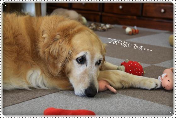 2011,6,19お庭遊び13