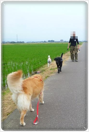 2011,6,19お庭遊び11