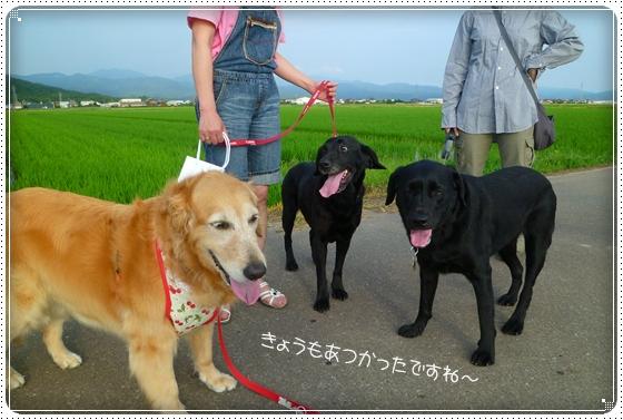 2011,6,25お散歩6