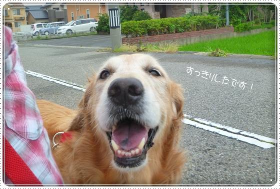 2011,6,25お散歩2