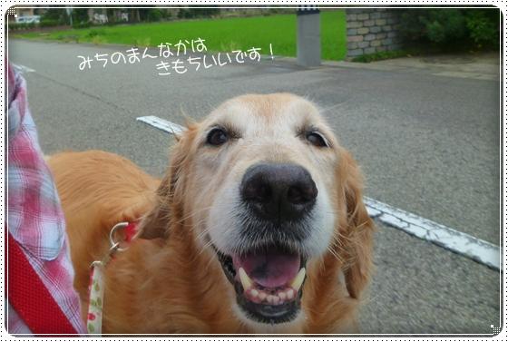 2011,6,25お散歩3