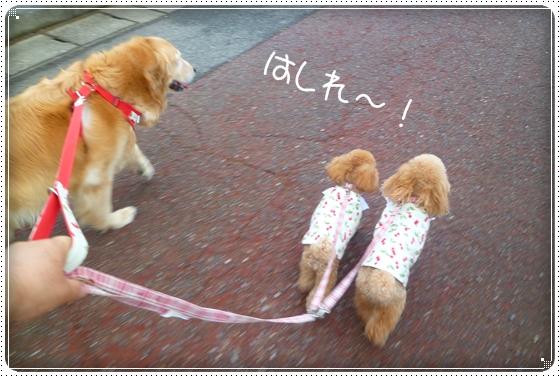 2011,6,25お散歩12