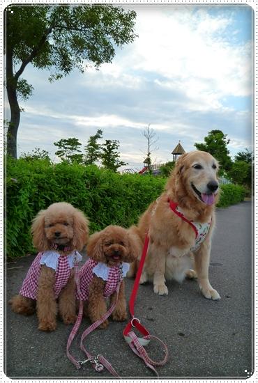 2011,6,27お散歩9